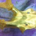 vergoldetes Hirschgeweih (Detail)